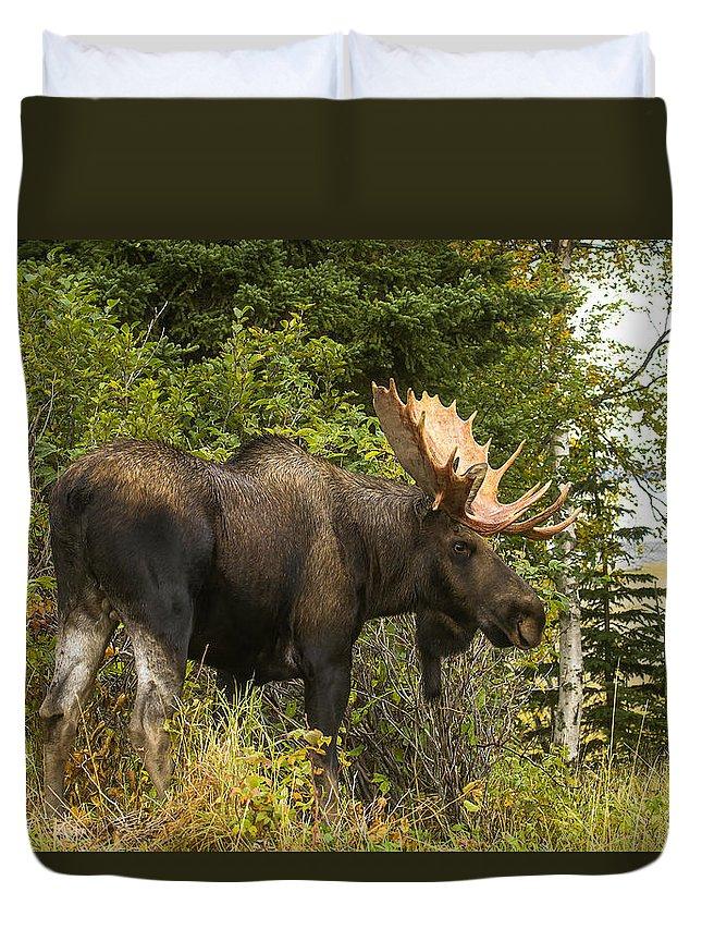 Alaska Duvet Cover featuring the photograph Fall Bull Moose by Doug Lloyd