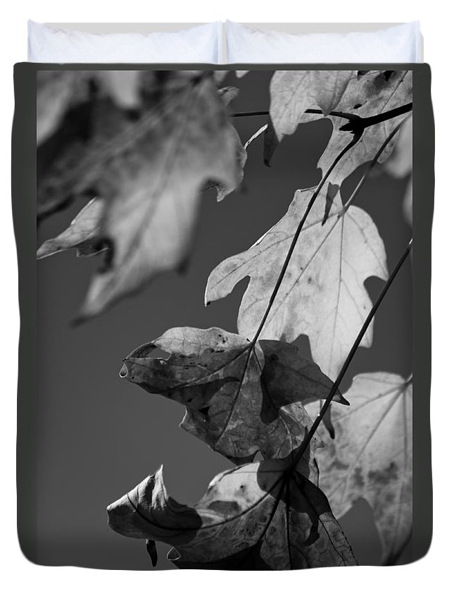 Leaf Duvet Cover featuring the photograph Fall Leaf Light by Lauri Novak
