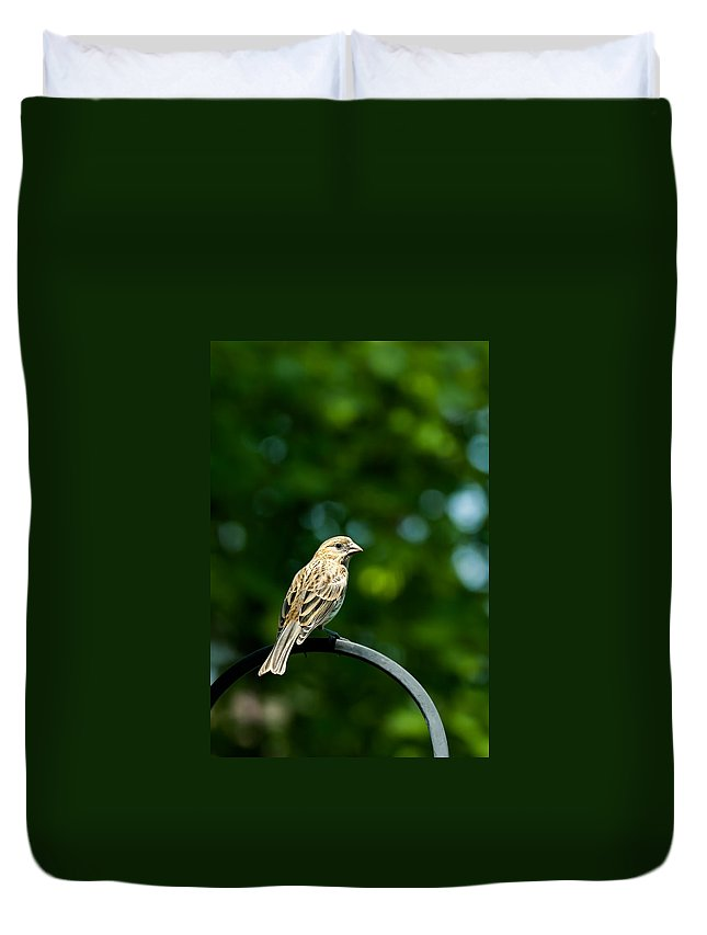 House Finch Duvet Cover featuring the photograph Female House Finch Perched by Onyonet Photo Studios