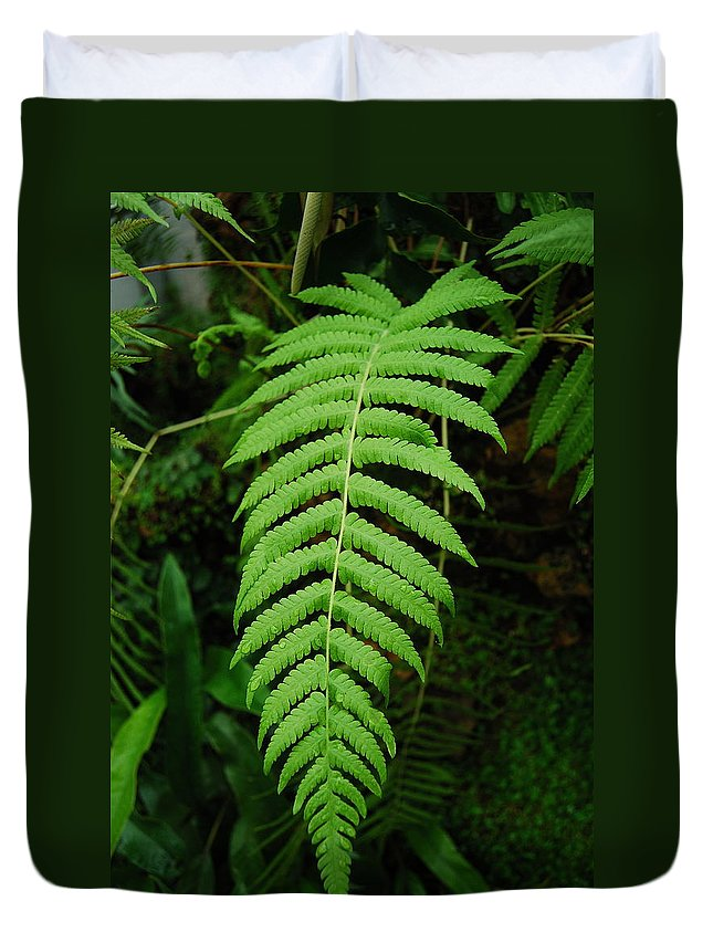 Fern Duvet Cover featuring the photograph Fern Frond 0576 by Michael Peychich
