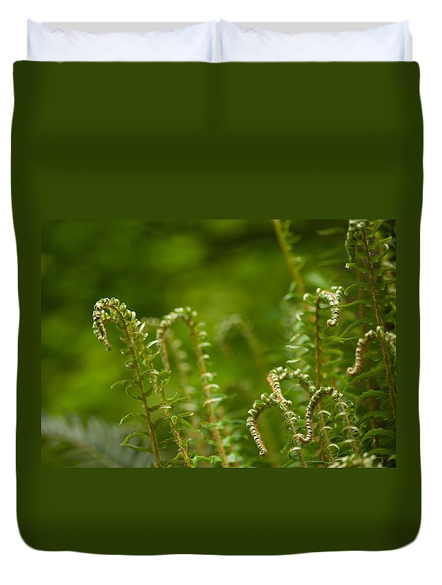 Ferns Duvet Cover featuring the photograph Ferns Fiddleheads by Mike Reid