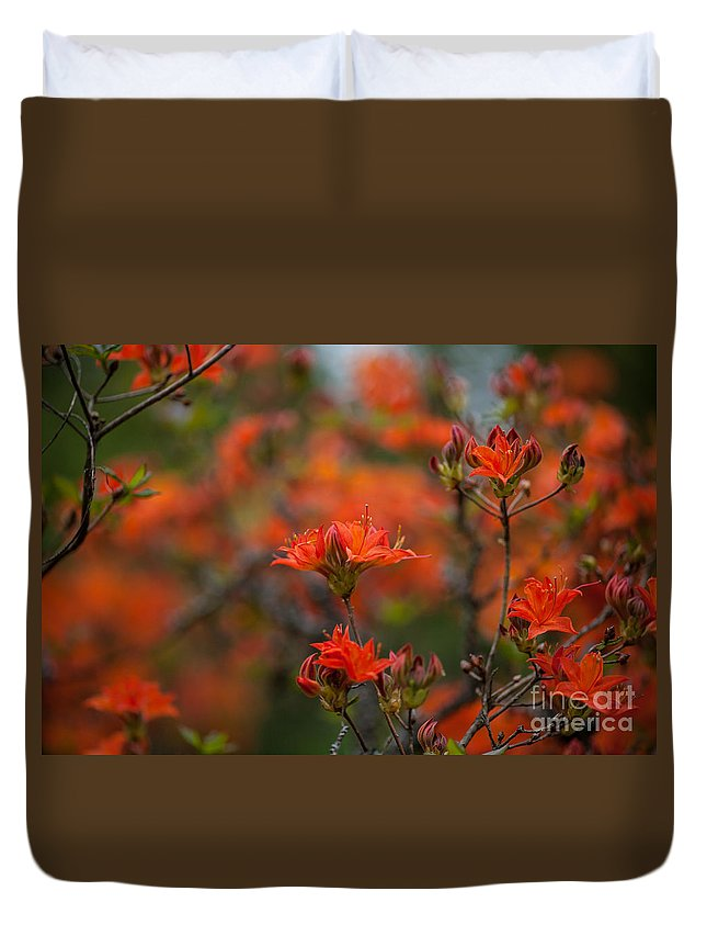 Rhodies Duvet Cover featuring the photograph Fiery Spring by Mike Reid