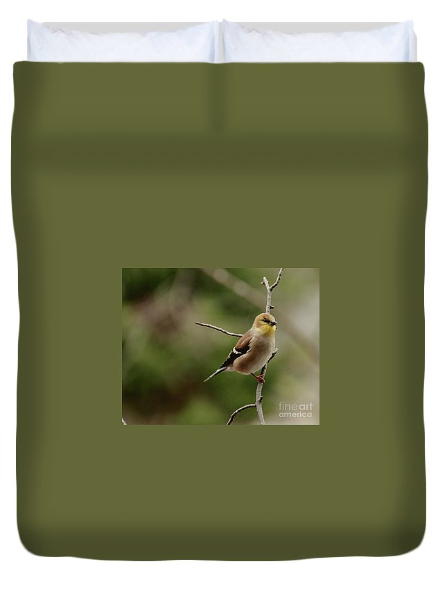 Funch Duvet Cover featuring the photograph Finch by Cheryl Baxter