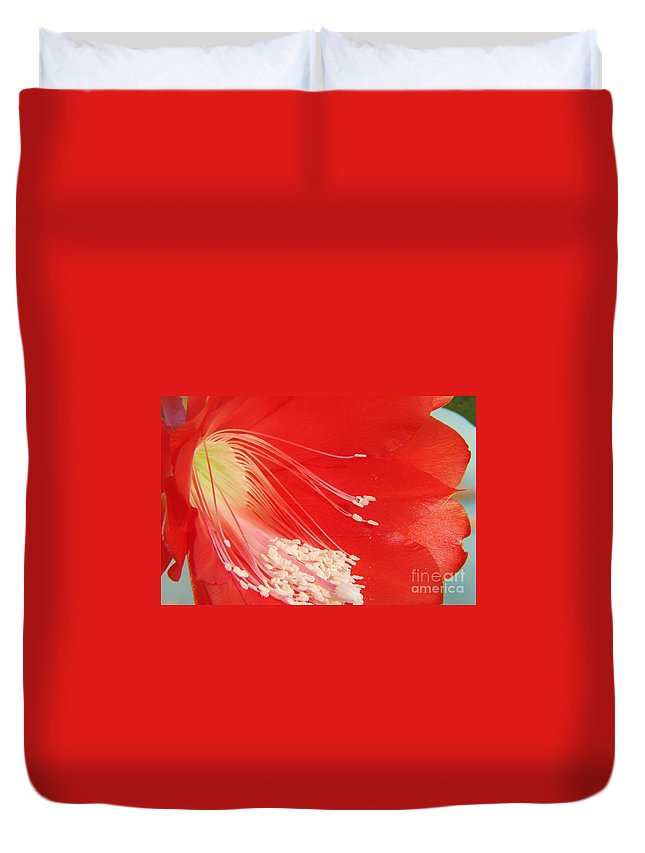 Red Duvet Cover featuring the photograph Fire Cactus by Priscilla Richardson