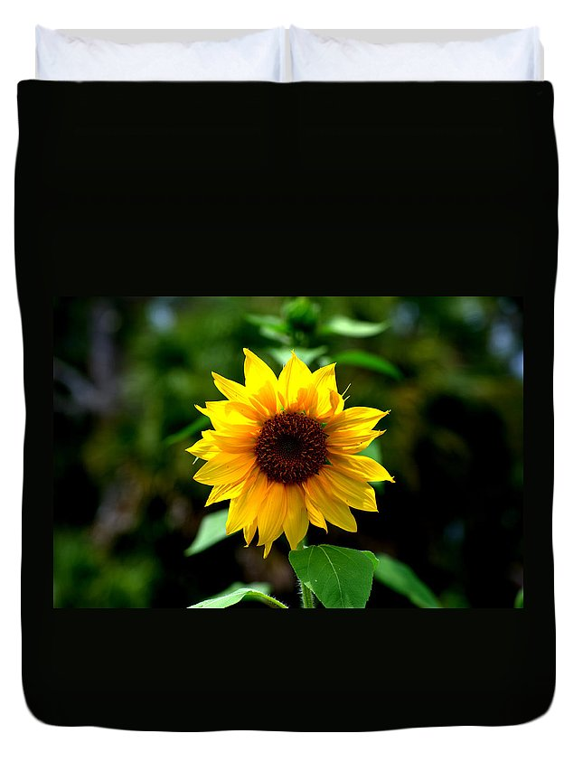 Sunflower Duvet Cover featuring the photograph First In Bloom by Kari Tedrick