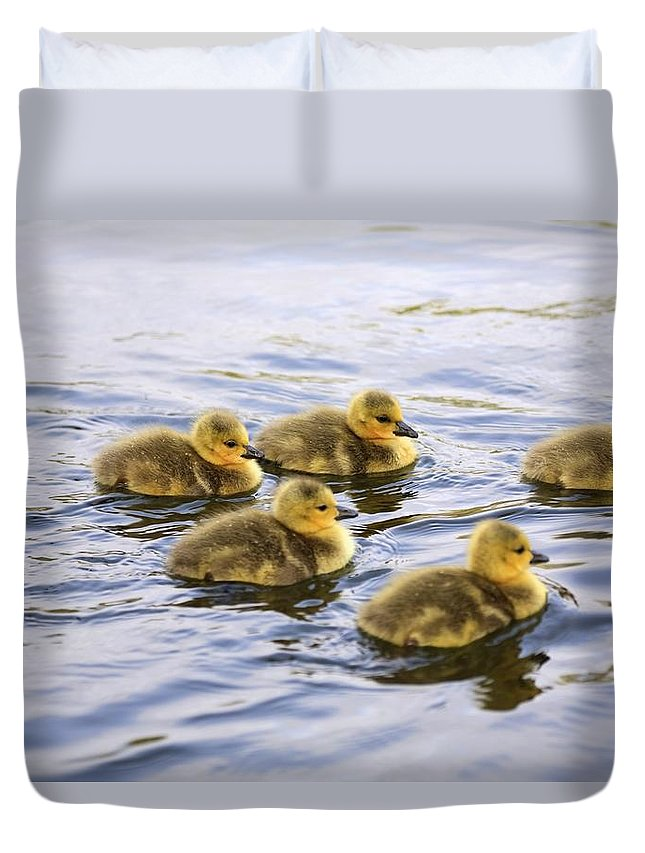 Gosling Duvet Cover featuring the photograph Five Goslings In The Water by Craig Tuttle