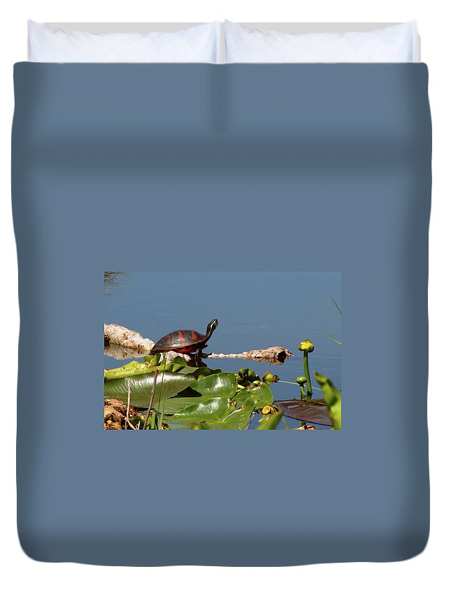 Nature Duvet Cover featuring the photograph Florida Redbelly Turtle by Peg Urban