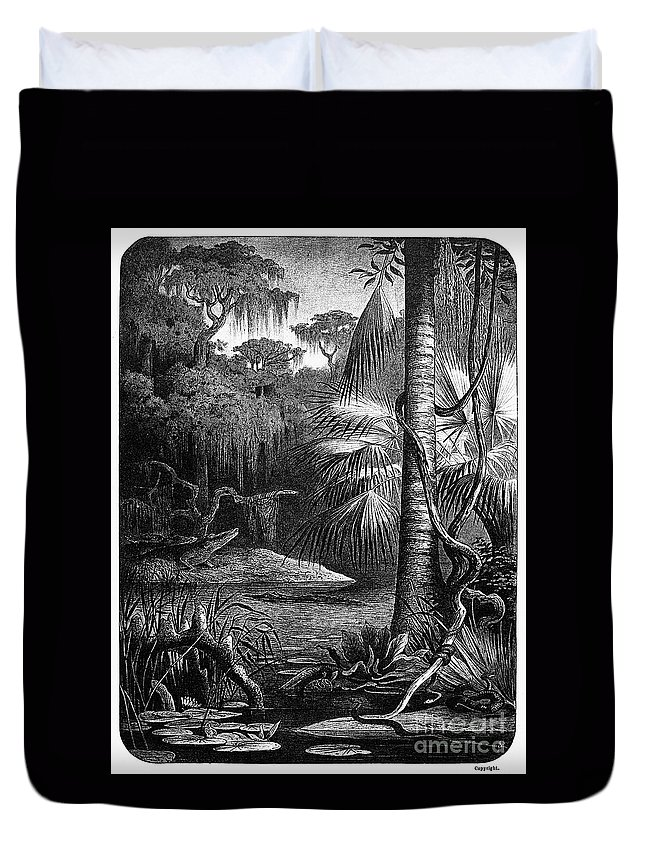 19th Century Duvet Cover featuring the photograph Florida: Swamp by Granger