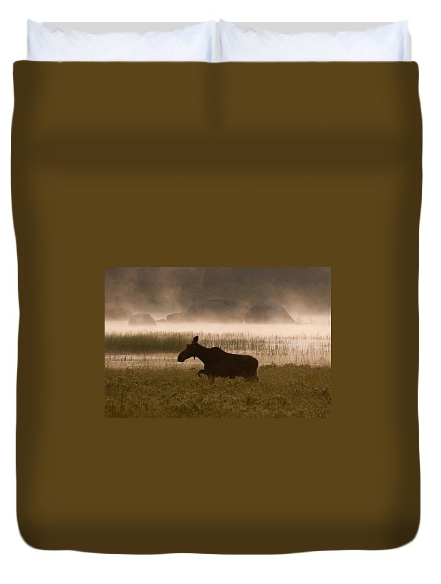 Moose Duvet Cover featuring the photograph Foggy Stroll by Brent L Ander