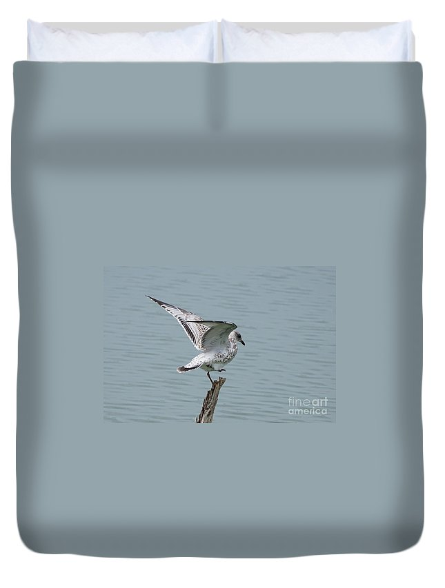 Seagull Duvet Cover featuring the photograph Foot Up Wing Test by Lori Tordsen