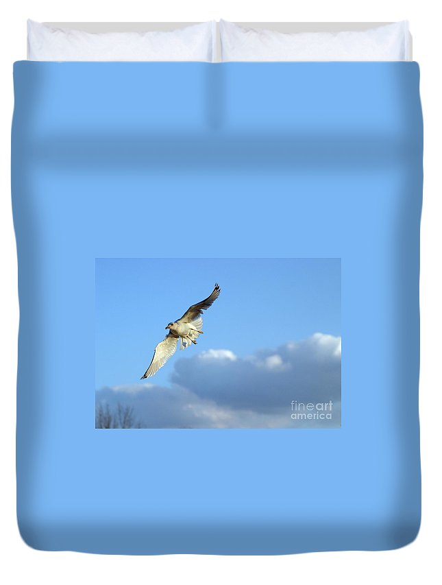 Bird Duvet Cover featuring the photograph Free Spirit by Living Color Photography Lorraine Lynch