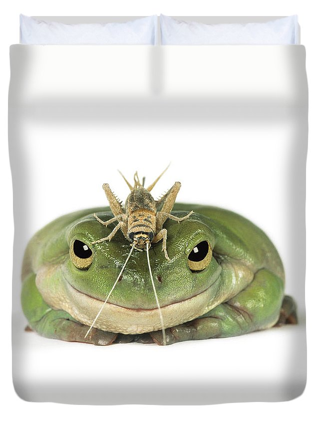 Light Duvet Cover featuring the photograph Frog And Grasshopper by Darwin Wiggett