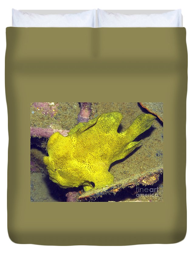 One Duvet Cover featuring the photograph Frogfish by MotHaiBaPhoto Prints