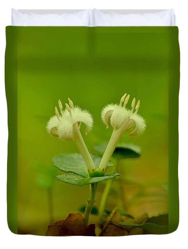 White Duvet Cover featuring the photograph Fuzzy Blooms by JD Grimes