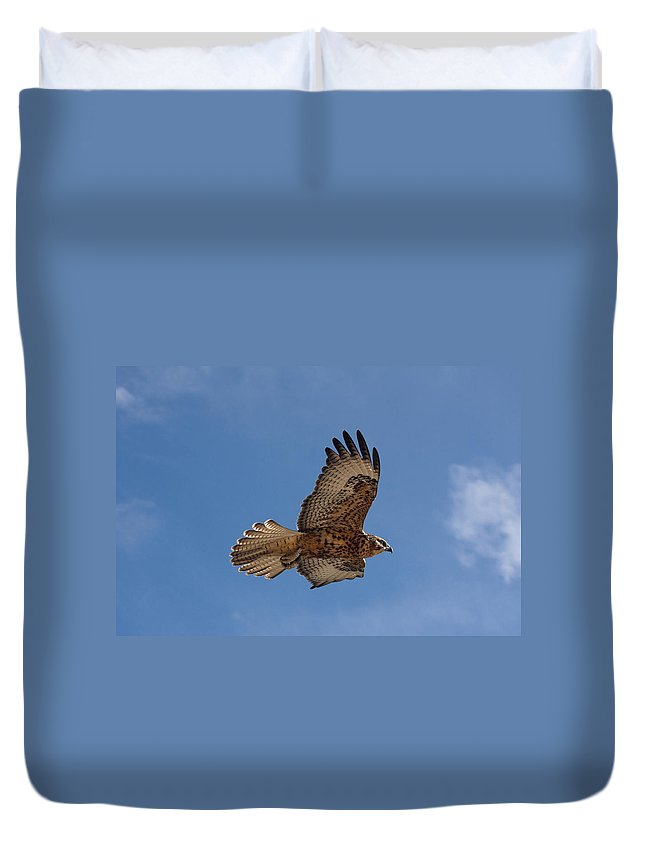 Galapagos Hawk Flying Duvet Cover featuring the photograph Galapagos Hawk Flying by Sally Weigand