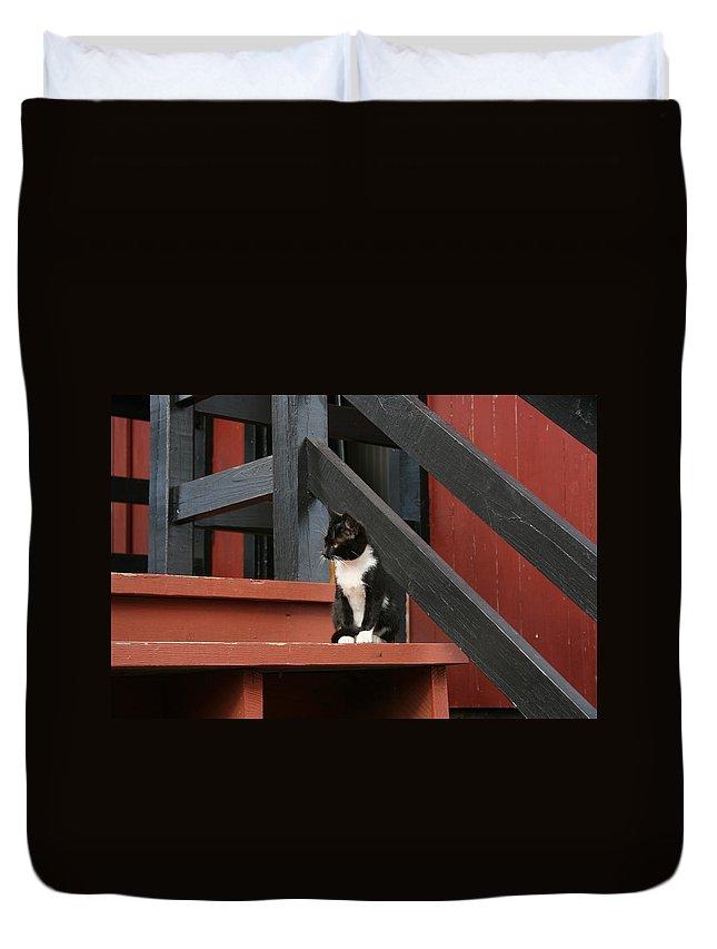 Tuxido Cat Duvet Cover featuring the photograph Gatto Bianco Gatto Nero by Tila Gun