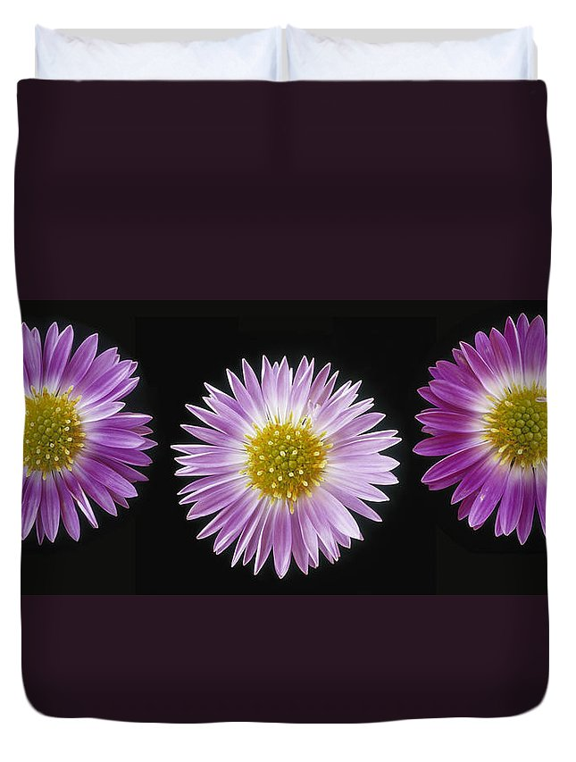 Light Duvet Cover featuring the photograph Gerber Dasies by Darwin Wiggett