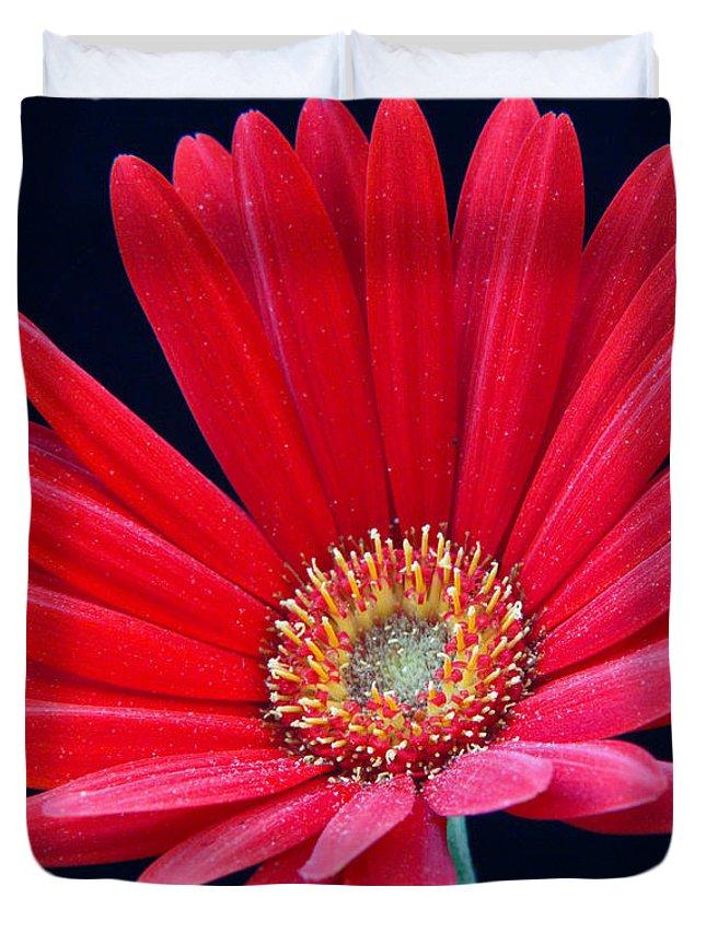 Gerbera Duvet Cover featuring the photograph Gerbera Daisy 1 by Douglas Barnett