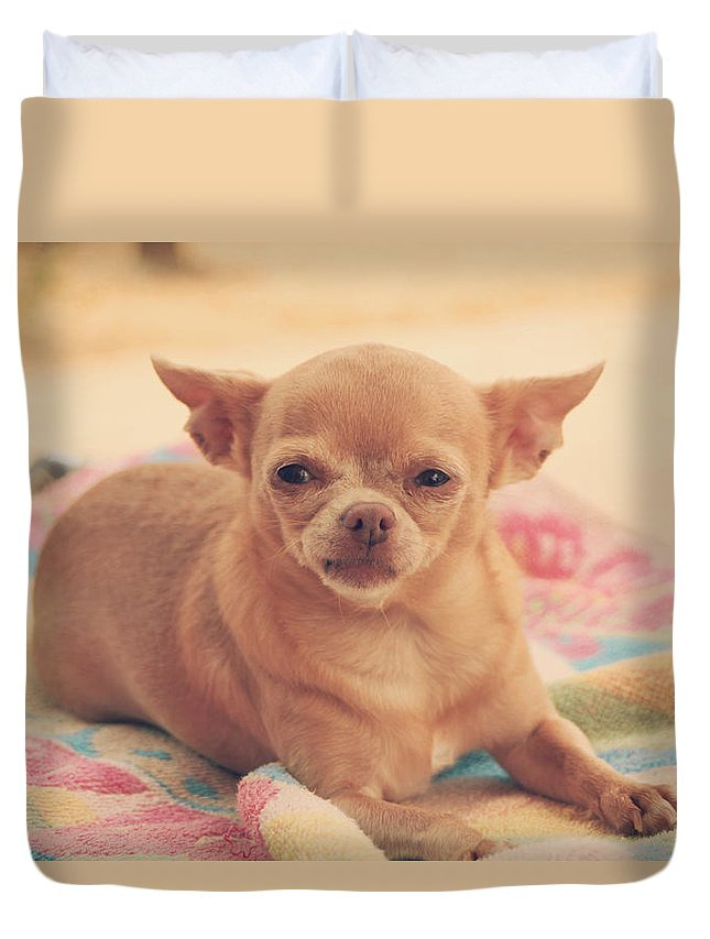 Dogs Duvet Cover featuring the photograph Getting Sleepy by Laurie Search