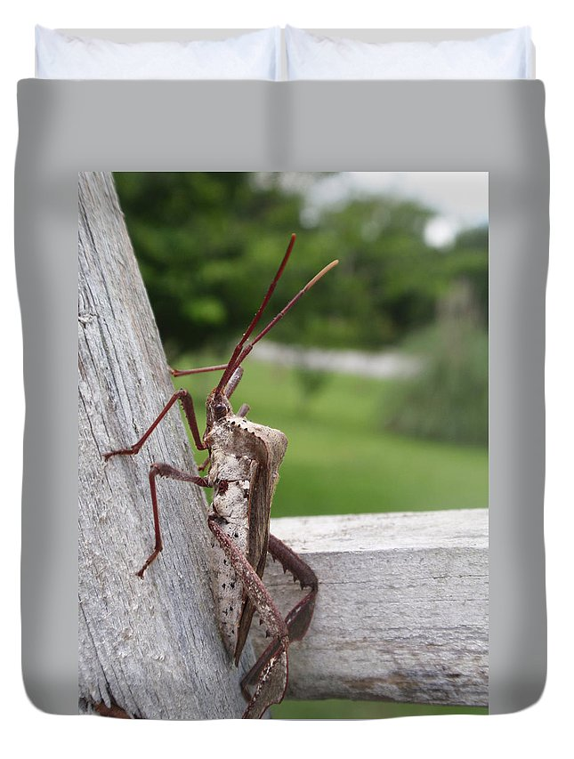 Assassin Duvet Cover featuring the photograph Giant Assassin Bug by Kathy Clark