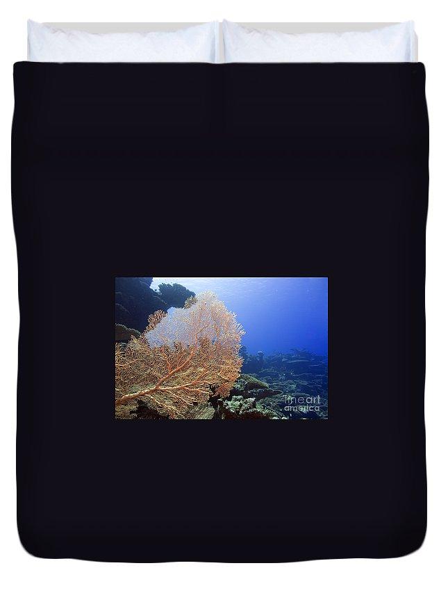 Landscape Duvet Cover featuring the photograph Giant Gorgonian Coral by MotHaiBaPhoto Prints