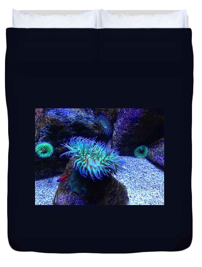 Giant Green Sea Anemone Duvet Cover featuring the photograph Giant Green Sea Anemone by Mariola Bitner