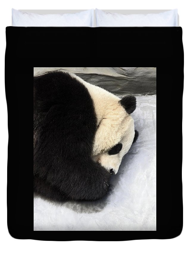 Giant Panda Bear Lying On Ground Duvet Cover featuring the photograph Giant Panda Portrait by Sally Weigand