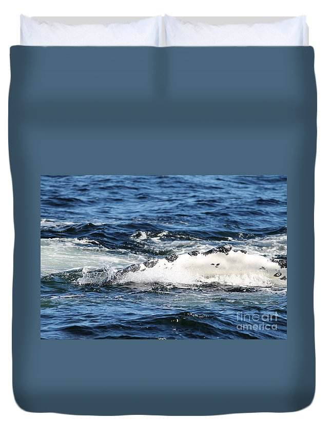 Hump Back Whale Duvet Cover featuring the photograph Giving Some Fin by Pamela Walrath