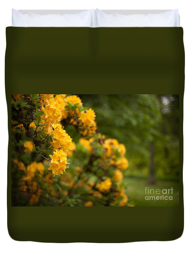 Rhodies Duvet Cover featuring the photograph Golden Glow by Mike Reid
