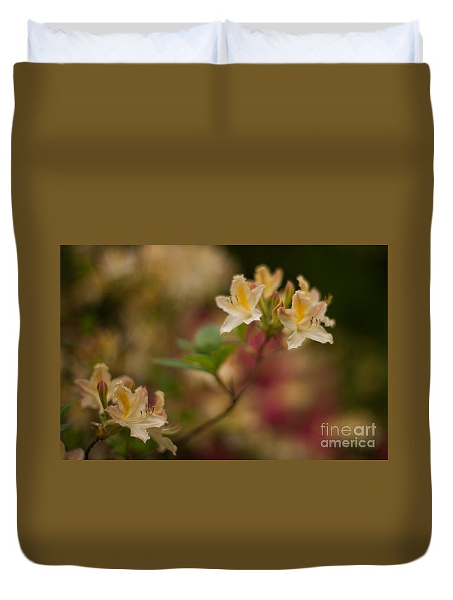 Rhodies Duvet Cover featuring the photograph Golden Morning by Mike Reid