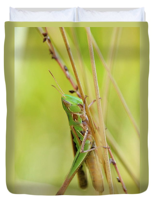 Close-up Duvet Cover featuring the photograph Grasshopper In Green by JD Grimes