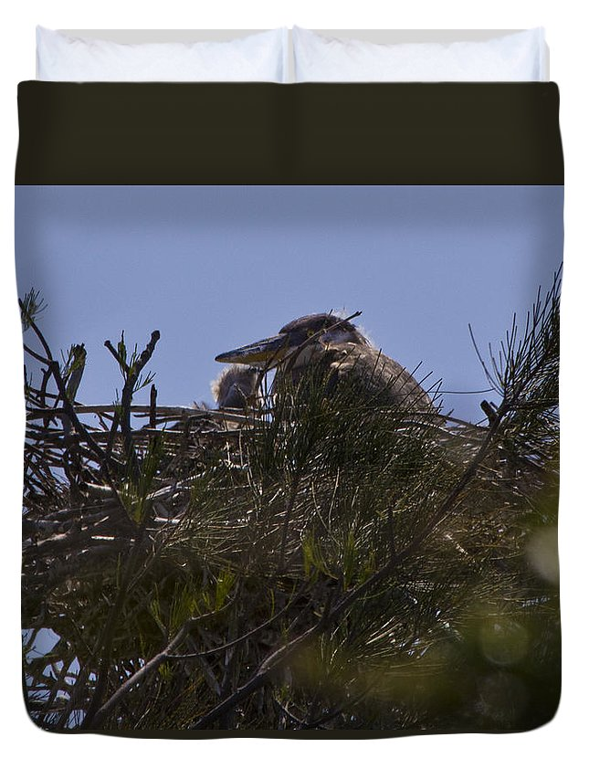 Great Blue Heron Duvet Cover featuring the photograph Great Blue Heron In Nest by Roger Wedegis