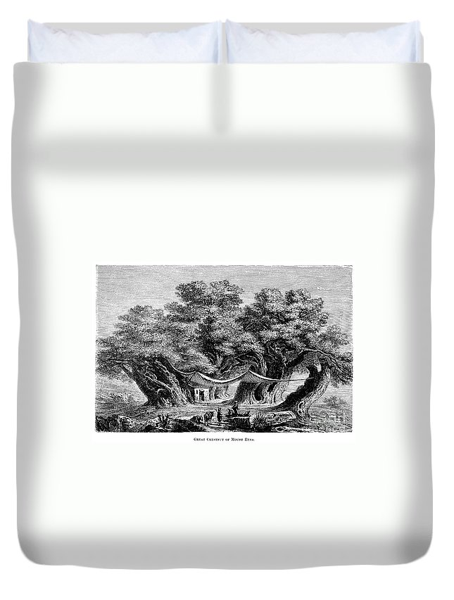 1873 Duvet Cover featuring the photograph Great Chestnut Tree by Granger