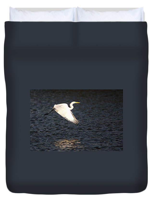 Roy Williams Duvet Cover featuring the photograph Great White Egret Flight Series - 11 by Roy Williams