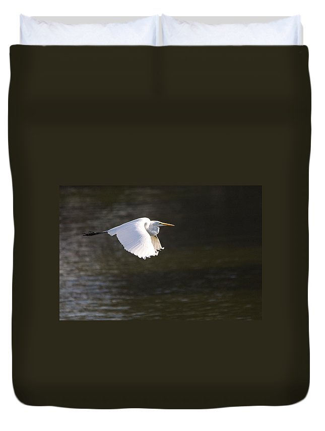 Roy Williams Duvet Cover featuring the photograph Great White Egret Flight Series - 3 by Roy Williams