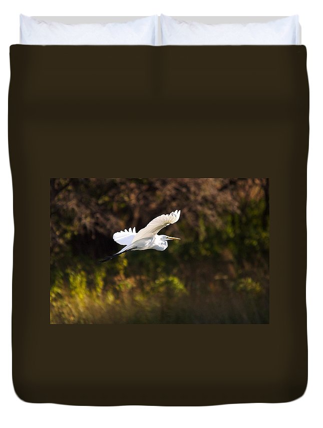 Egret Duvet Cover featuring the photograph Great White Egret Flight Series - 6 by Roy Williams