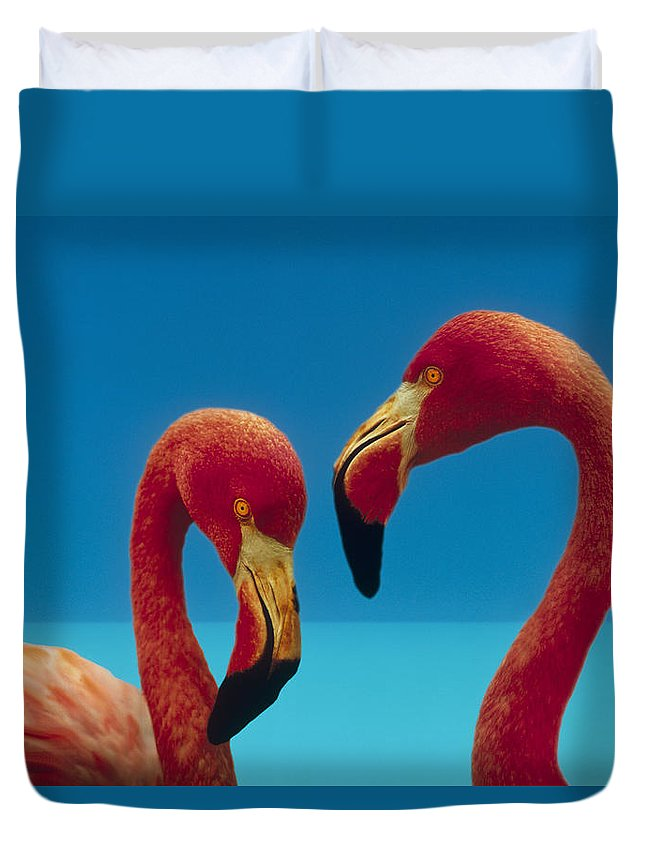 00172310 Duvet Cover featuring the photograph Greater Flamingo Courting Pair by Tim Fitzharris
