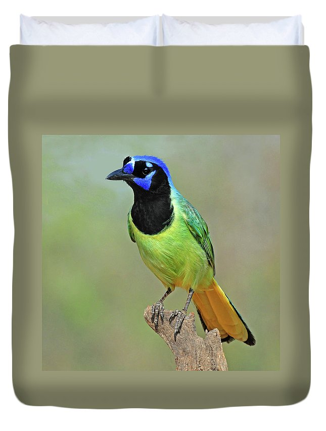 Green Jay Duvet Cover featuring the photograph Green Jay by Dave Mills