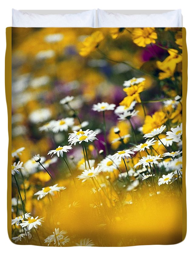 Group Duvet Cover featuring the photograph Group Of Daisies by Natural Selection Craig Tuttle