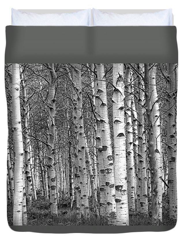 Art Duvet Cover featuring the photograph Grove Of Birch Trees by Randall Nyhof