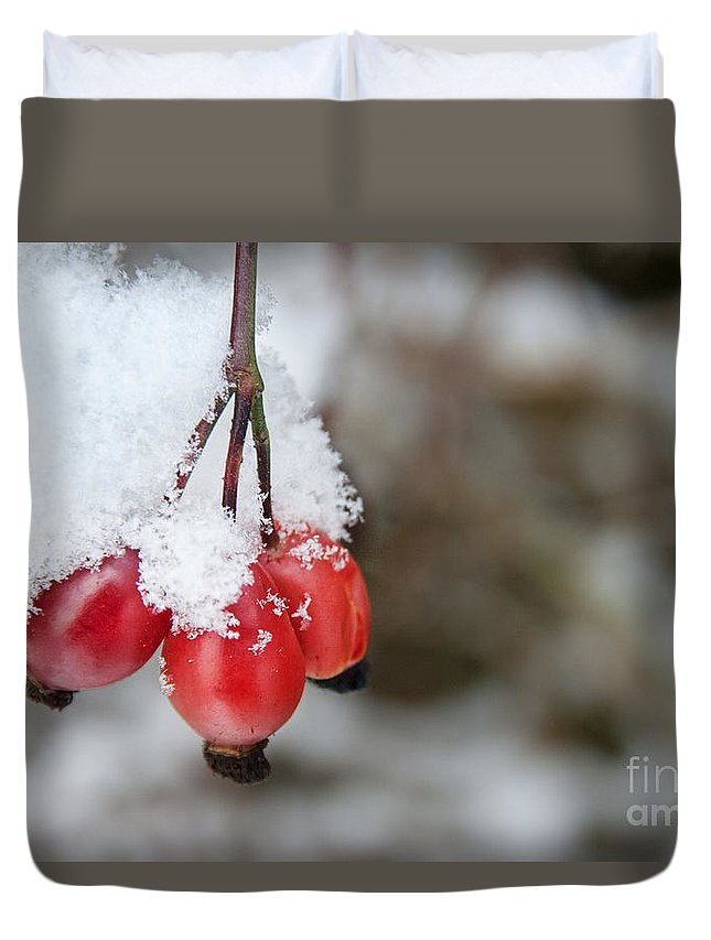 Red Berry Duvet Cover featuring the photograph Guelder Rose In The Snow by Ann Garrett