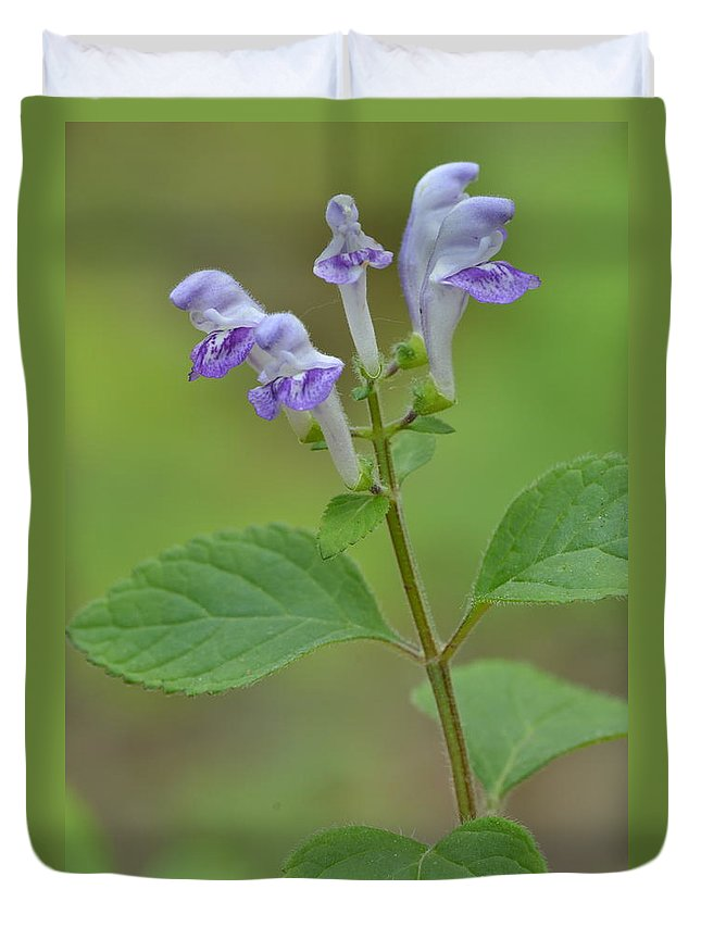 Blue Duvet Cover featuring the photograph Hairy Skullcap by JD Grimes
