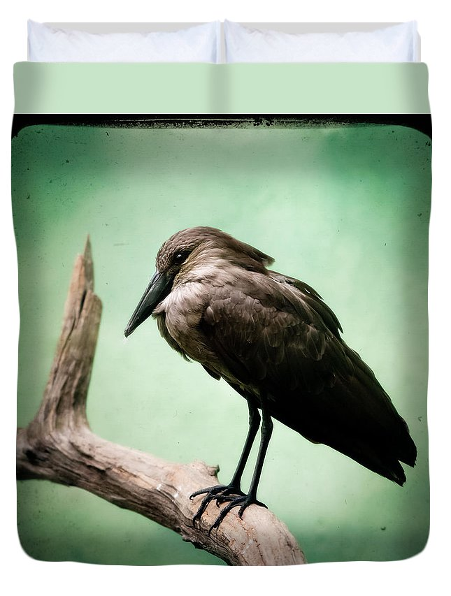 Bird Duvet Cover featuring the photograph Hamerkop by Gary Heller