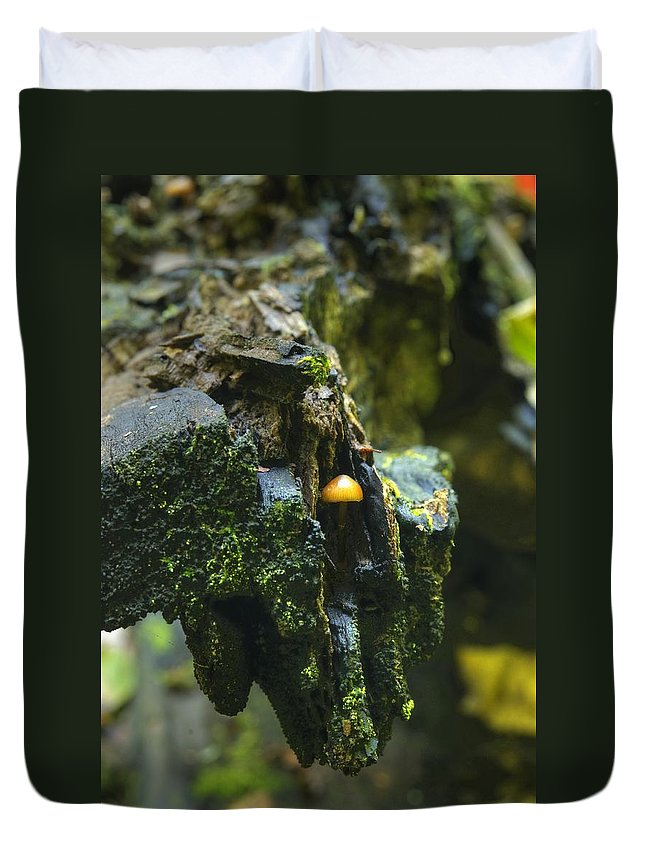 Mushroom Duvet Cover featuring the photograph Hanging In There by Michael Peychich