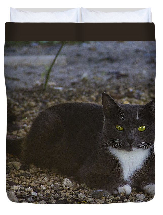 Cat Duvet Cover featuring the photograph Hanging Out By The Creek by Roger Wedegis