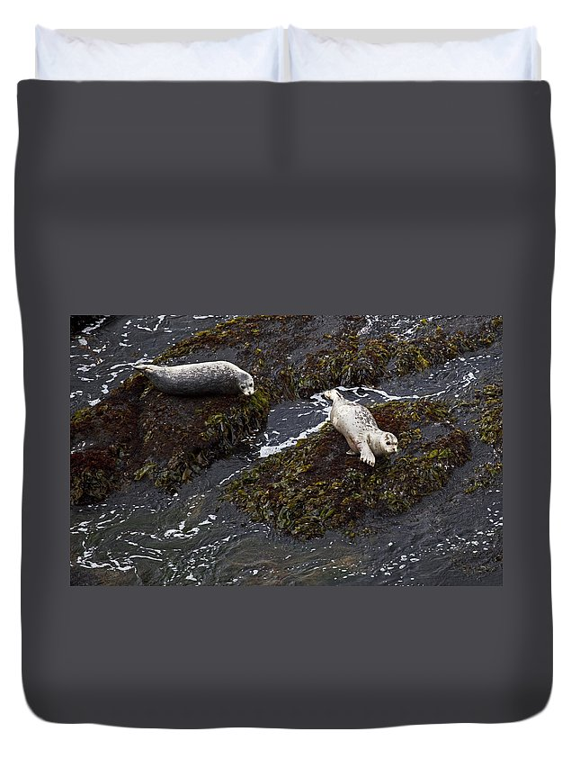 Nature Duvet Cover featuring the photograph Harbor Seals by Karen Ulvestad