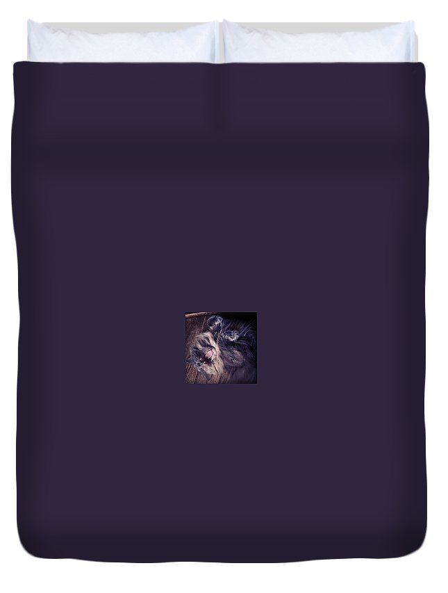 Fangs Duvet Cover featuring the photograph Has #fangs. Not Afraid To Use 'em by Katie Cupcakes