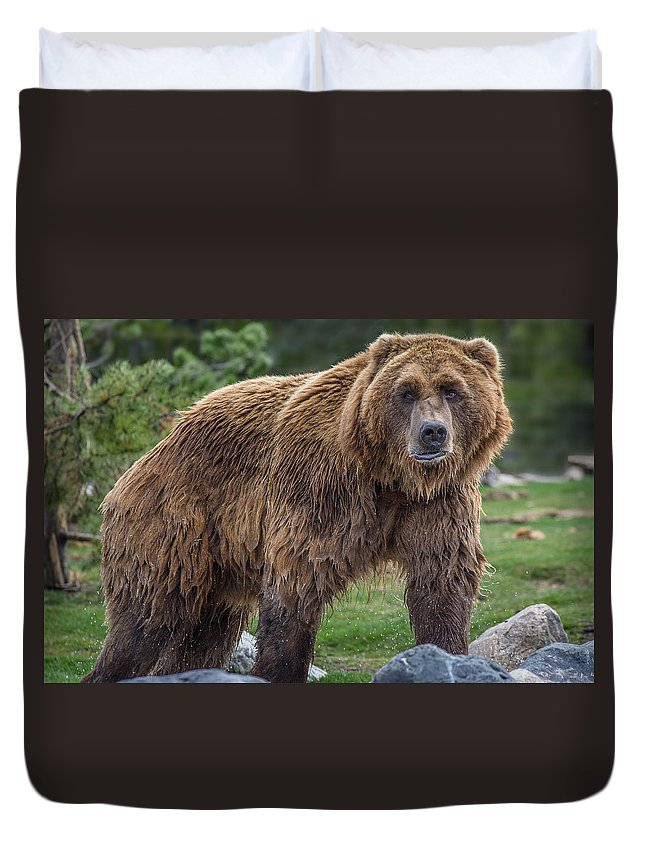 Grizzly Duvet Cover featuring the photograph Having A Bad Fur Day by Greg Nyquist