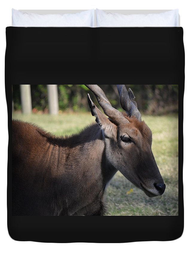 Eland Duvet Cover featuring the photograph Headshot Eland by Maggy Marsh