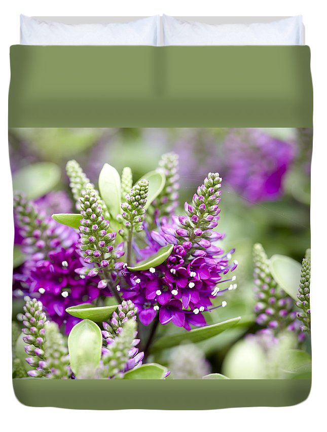 Hebe Hebe Sp Dona Diana Variety Flowers Duvet Cover For Sale By
